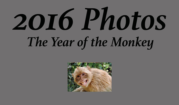 2016 A Year of Photography