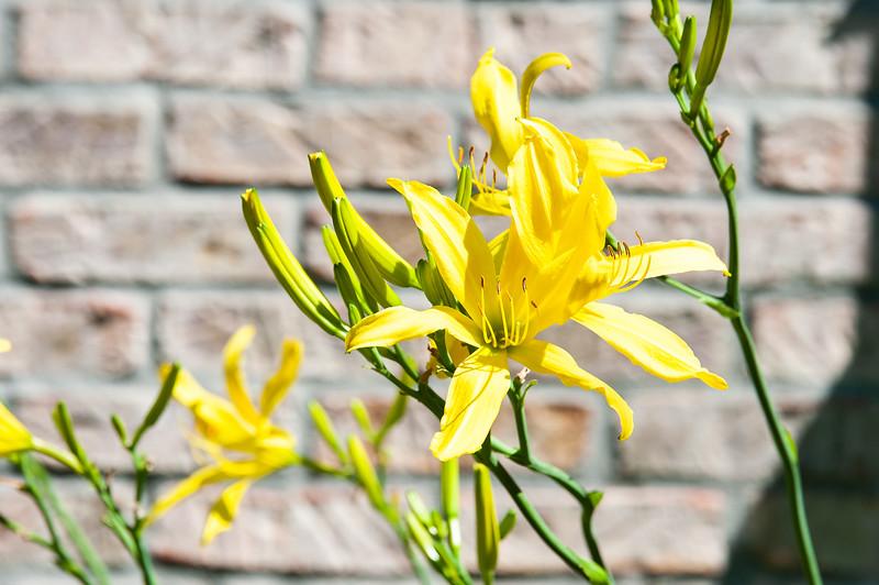 20190714 Daylilies and Flowers-6400.jpg