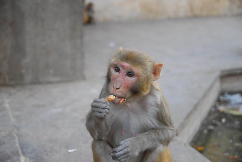 MonkeyTemple-17.jpg