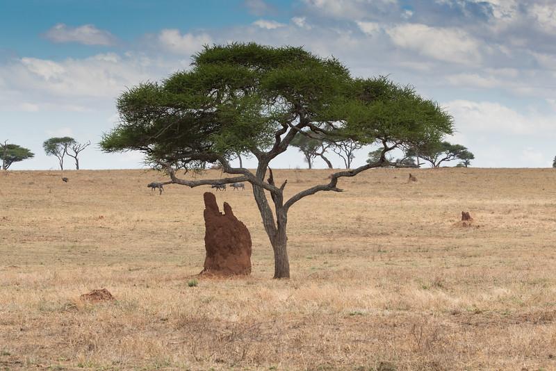 Africa - 102116 - 8226.jpg