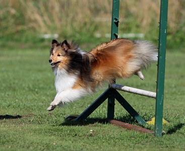 Advanced Agility Class - 12 Aug 2012