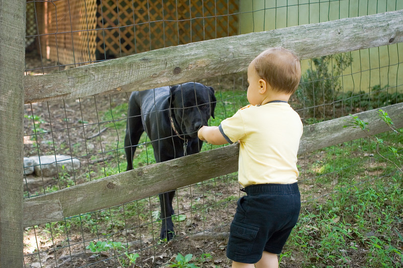 K.C. loves visiting with his neighbor, Cash.  He feeds her treats through the fence.