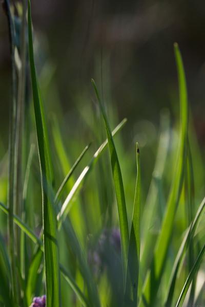 Blades of Grass $4