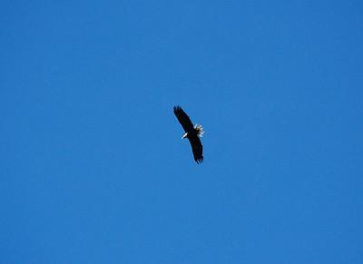 Eagles Game 8/16