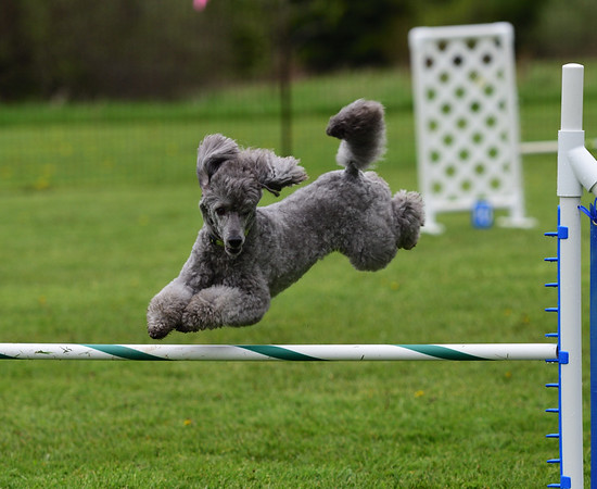 Agility Trial - 2019 Sat May 25