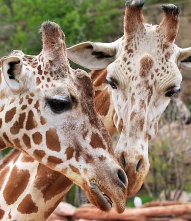 Pikes Peak & Cheyenne Mtn Zoo 2015