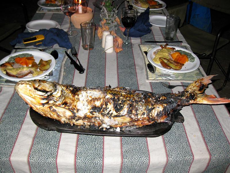 TIGER FISH-Z.jpg