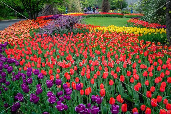 Zoo spring flowers