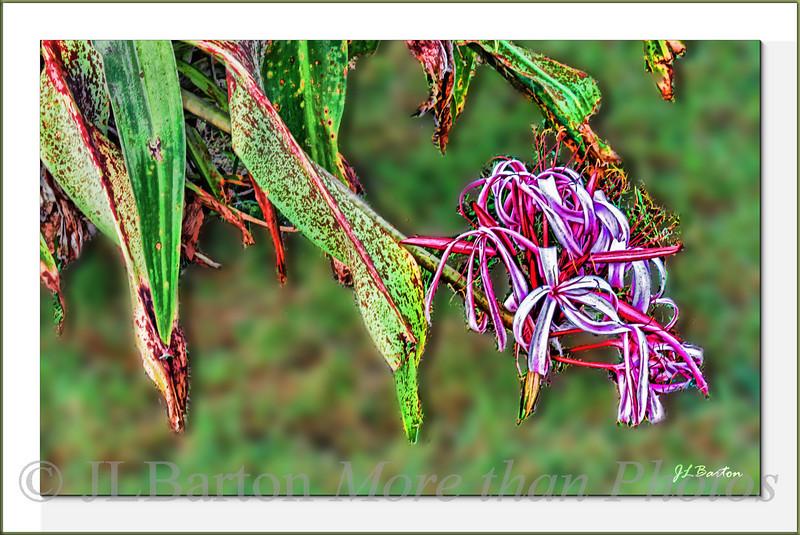 Flowering Garden Plant   (which?) Port Charlotte Florida