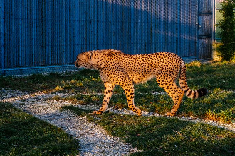 Tonis Zoo-0367.jpg