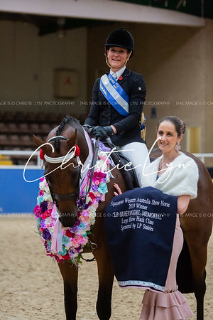 Class 23: LP Supermodel Memorial Award Large Show Hack over 16 hh