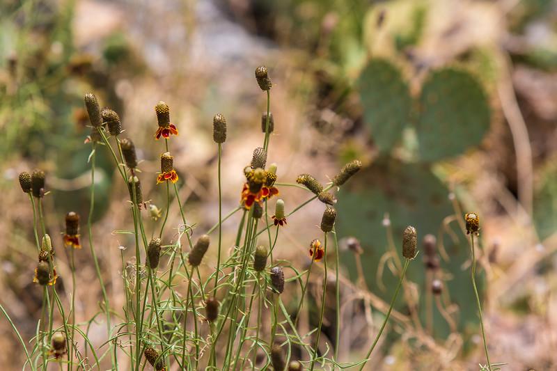Wildlife Ranch-0233.jpg