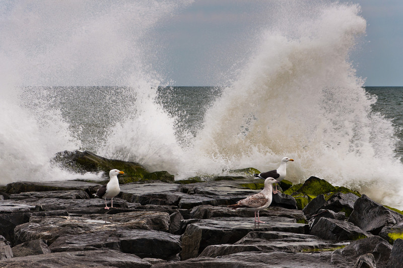 Waves splash rocks and seagulls, Cape May, New Jersey