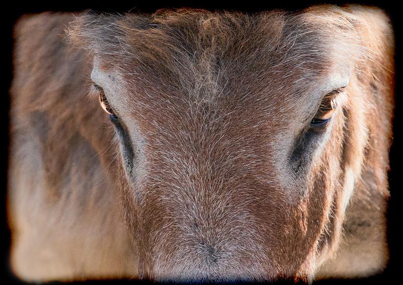 an32-J126  April2018 Animals 3 TheStare.jpg