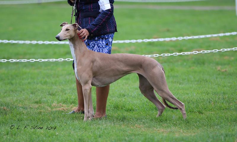 2017 Greyhound Club of America Western Specialty