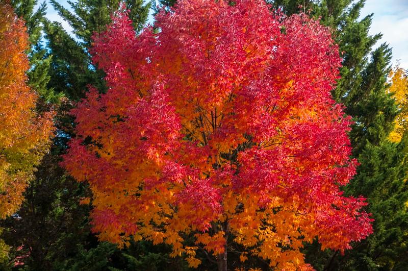 Ashland_Fall Colors-7.jpg