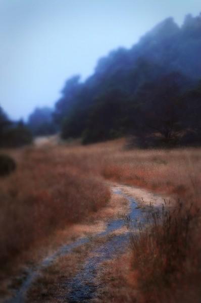 Foggy Trail, Sea Ranch, California