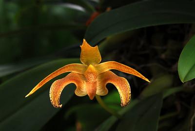 Day lillies, Oriental Lillies, Stargazer Lillies ....Lillies