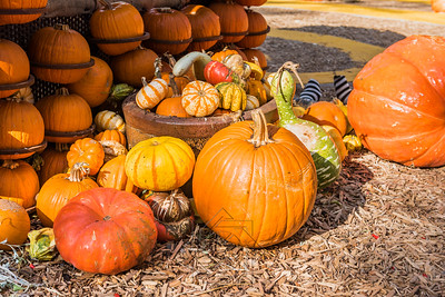 Basket of colorful gourds with large pumpkin
