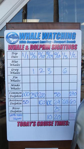 Newport Landing Whale Watching - 1/4/2014