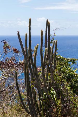 Antigua - Nature