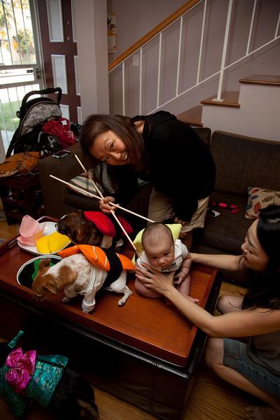 Dog-sushi-halloween2.jpg