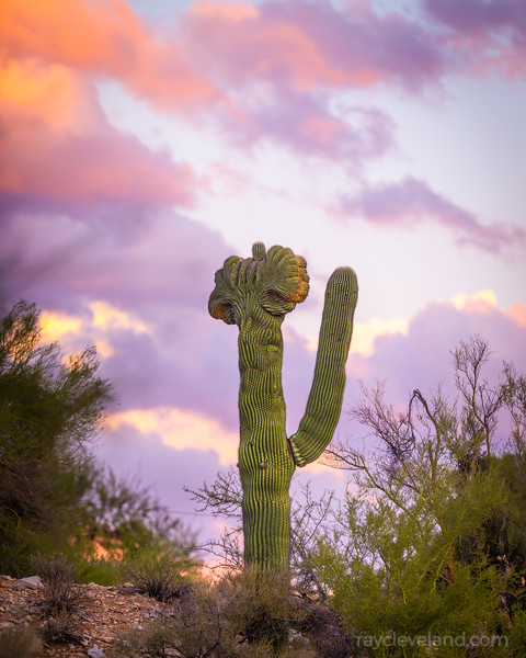 20201107-sunset-and-saguaros--hdr-002.jpg