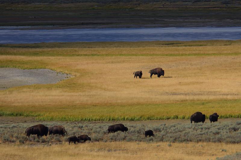Yellowstone 061.JPG