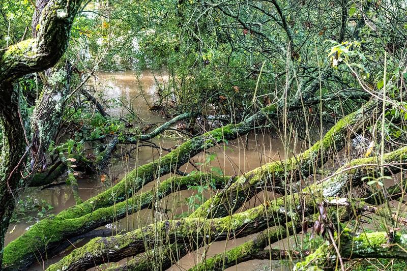 500_Woods-Mill-4037.jpg