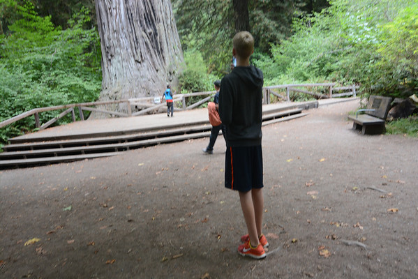 redwoods 2013 08 23