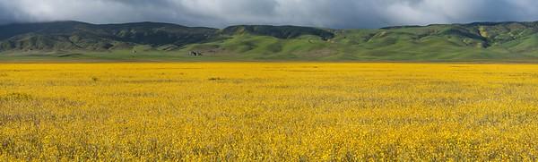 CA-Carrizo Plain National Monument