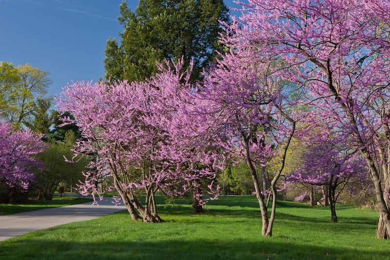 Spring12-1537.jpg