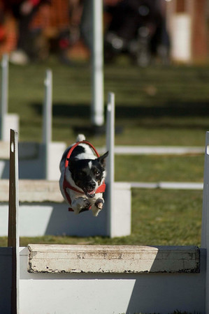 Flyball, Geelong, Aug 2006 (Part 2)