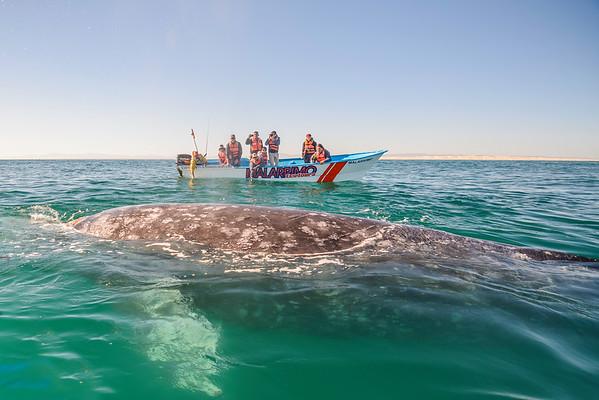 Andiamo Travel 2016 Whale Tour Vibrance