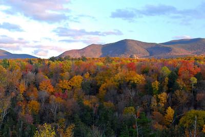 Foliage 10/10/2009