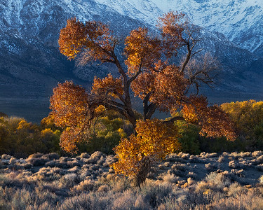 Eastern Sierras & Death Valley II