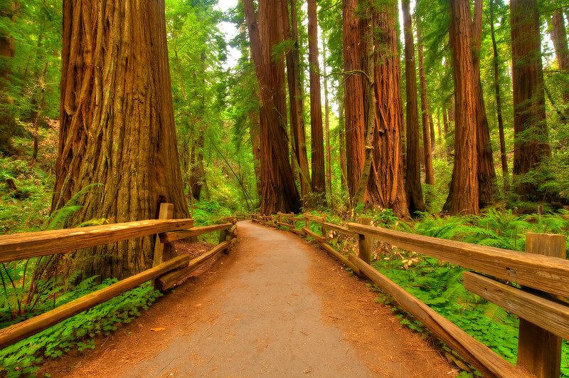 Muir Woods