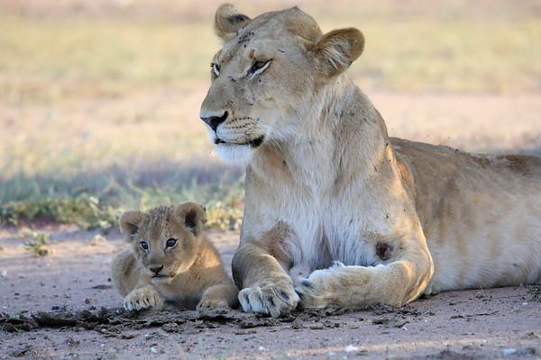 Kenya 2018 Mara Asilia , Laikipia Wilderness, Nairobi