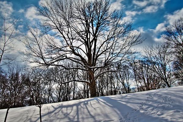 Winter - 1/24/14