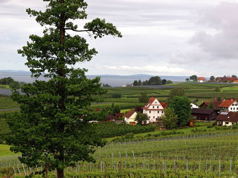 Weingut Schmidt Hattnau 23-05-14 (19).jpg