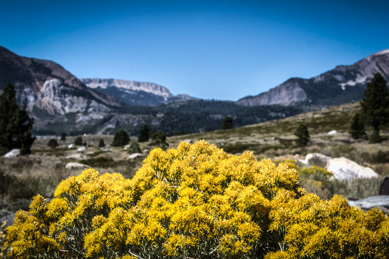 August 21 - Mammoth Crest_ Mammoth Lakes_ CA.jpg