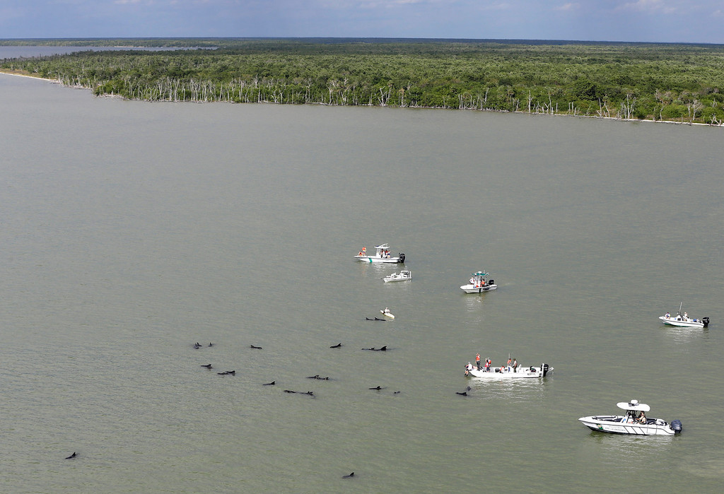 . Officials in boats monitor the scene where dozens of pilot whales are stranded in shallow water in a remote area of Florida\'s Everglades National Park, Wednesday, Dec. 4, 2013. (AP Photo/Lynne Sladky)
