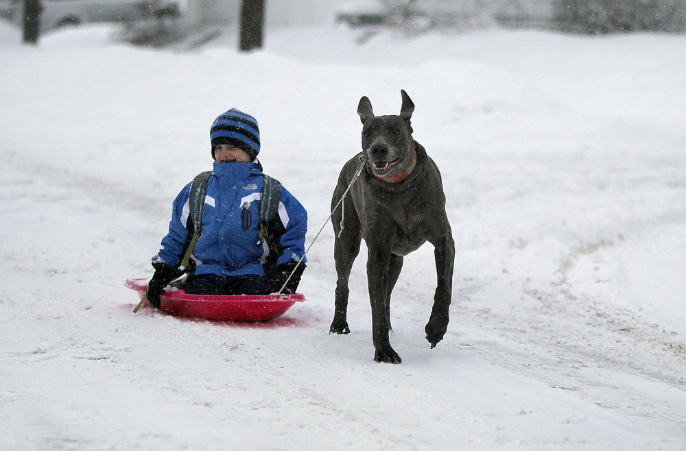 ". Charlie Regenold, 5, gets a ride to the school bus stop from his dog ""Rodney\"" as the snow fell early Tuesday, March 5, 2013 in southwest Minneapolis. The National Weather Service predicted a two-day snow total of 8 to 12 inches for much of southeastern and east-central Minnesota, including the Twin Cities.  (AP Photo/The Star Tribune, Elizabeth Flores)"