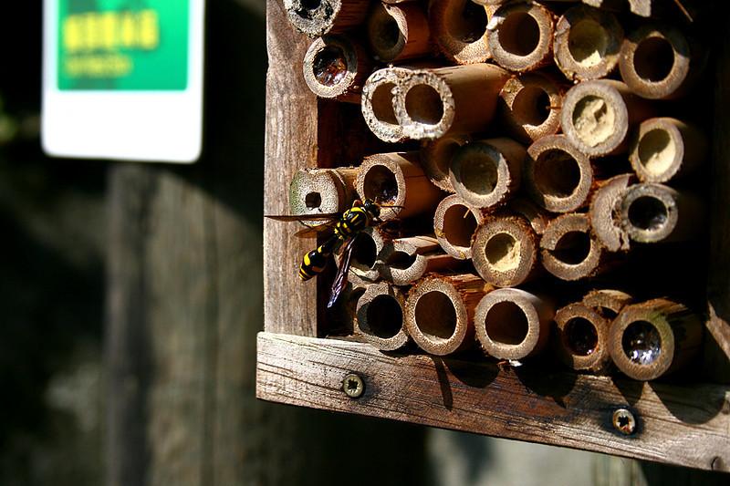 Kadoorie Farm, Bee