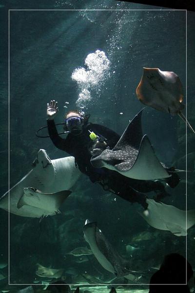 Diver in the tank at the Aquarium.
