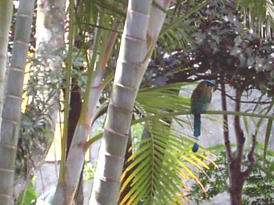 FLOWERS, PLANTS, BIRDS, ANIMALS, BUGS - Graphics of Costa Rica