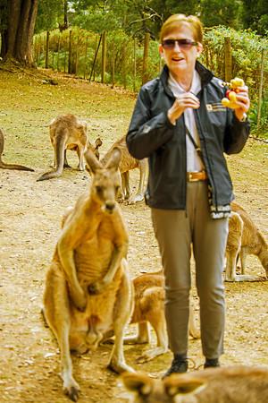 Burnie, Tasmania - 2014/16