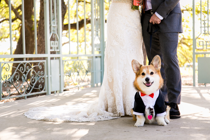 Dog-Wedding-Photos-007.jpg