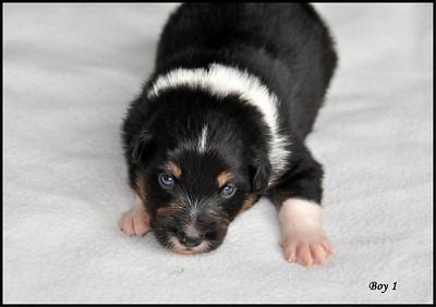 Wannahave Kaitlin Mac and Sam's pups