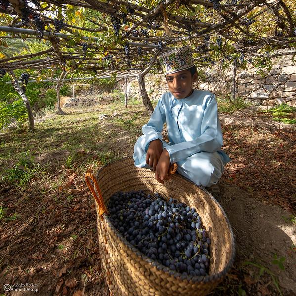 Grape - Wakan village - Nakhal223- Oman.jpg